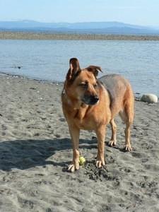 Pets allowed Sept 1 - July 1